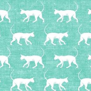 Sphynx cat - teal - hairless cat -  LAD19