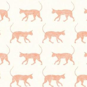 Sphynx cat - peach on cream - hairless cat -  LAD19