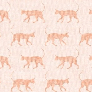 Sphynx cat - two tone peach - hairless cat -  LAD19