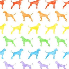 boxer dogs - rainbow  - LAD19