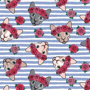 Floral Crowned Sphynx -  stripes - hairless cat - LAD19