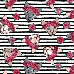 Floral Crowned Sphynx - black stripes - hairless cat - LAD19