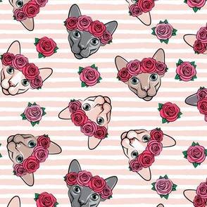 Floral Crowned Sphynx - pink stripes - hairless cat - LAD19