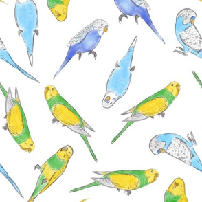 Large Scale Rise and Shine Budgies on White