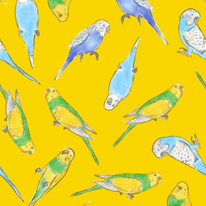 Large Scale Rise and Shine Budgies on Yellow