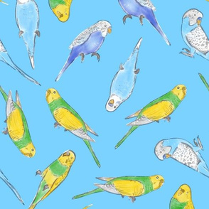 Large Scale Rise and Shine Budgies on Blue