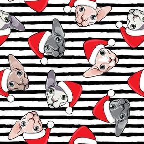 Santa Sphynx - black stripes - hairless cat - LAD19