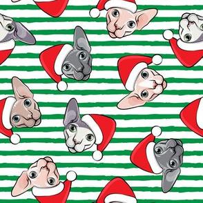 Santa Sphynx - green stripes - hairless cat - LAD19