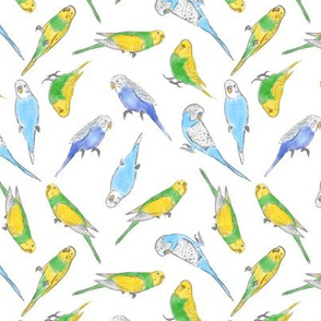 Small Scale Rise and Shine Budgies on White