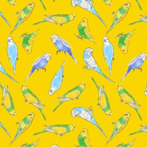 Small Scale Rise and Shine Budgies on Yellow