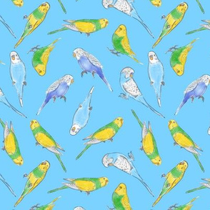 Small Scale Rise and Shine Budgies on Blue
