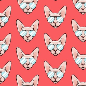 Cool Cats - Sphynx cat with sunglasses - red - hairless cat - LAD19
