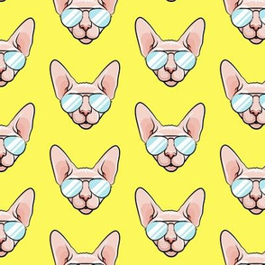 Cool Cats - Sphynx cat with sunglasses - yellow - hairless cat - LAD19