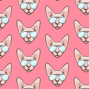 Cool Cats - Sphynx cat with sunglasses - pink - hairless cat - LAD19