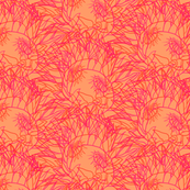 Protea 5 Macarena, Brights