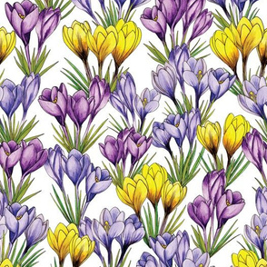 Purple & Yellow Crocus Pattern - Colorful Flowers For Spring