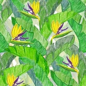 Yellow Birds of Paradise