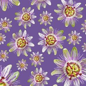 19-07w Tropical Passionfruit Passion Fruit Flower Purple