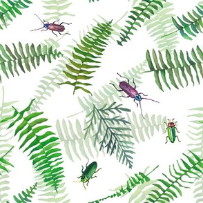 Ferns_and_bugs