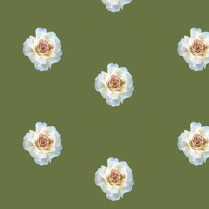 kaki white rose
