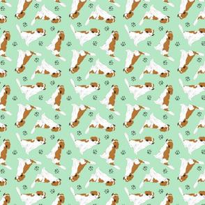 Tiny Kooikerhondje - green
