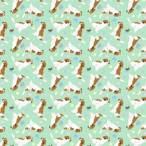 Tiny Kooikerhondje - Easter