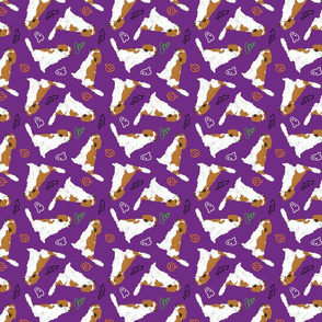 Tiny Kooikerhondje - Halloween