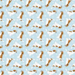 Tiny Kooikerhondje - winter snowflakes