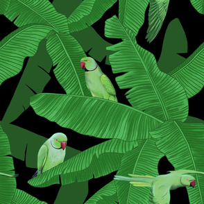 Tropical Green Parrots on Banana Tree - Black
