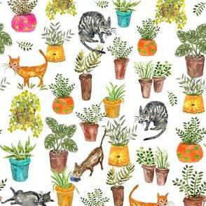 Cats & Pots