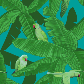 Tropical Green Parrot Birds within Banana Leaves