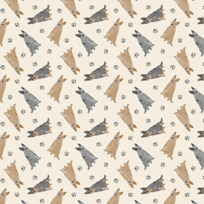 Tiny Australian cattle dogs - tan