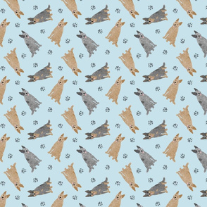 Tiny Australian cattle dogs - blue