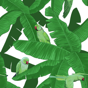 Tropical Green Parrot Birds on Banana Leaves - White Largest Size