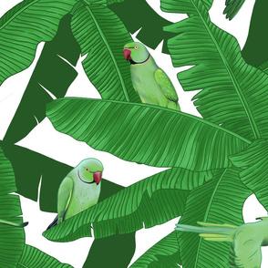 Tropical Green Parrot Birds on Banana Leaves - White Medium Size