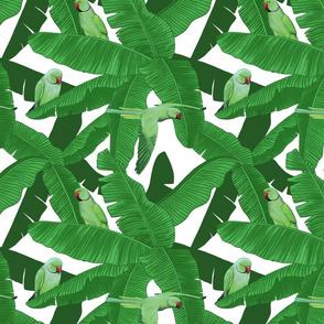 Tropical Green Parrot Birds on Banana Leaves - White Small