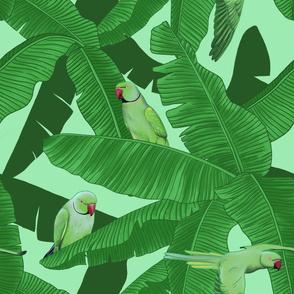 Tropical Green Parrot Birds on Banana Leaves - Light Green Large Print