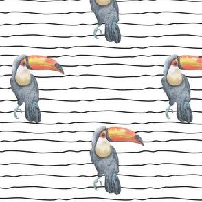 Toucan Stripe