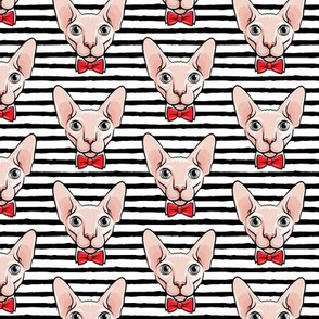 formal sphynx cat - black stripes - hairless cats - LAD19