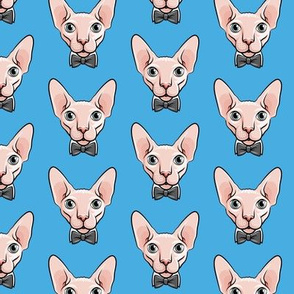 formal sphynx cat - blue - hairless cats - LAD19