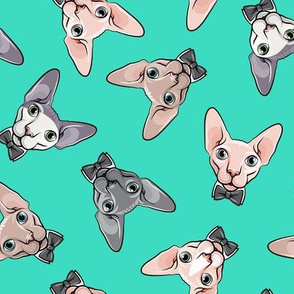 formal sphynx cat - toss on teal - hairless cats - LAD19