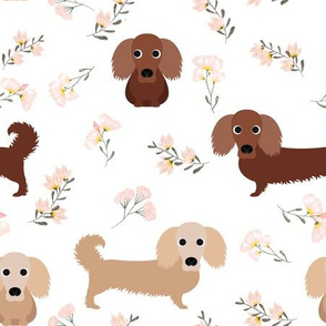 """9"""" dachshund floral fabric - dog fabric, dachshund fabric, pet fabric, dachshund fun fabric - white"""