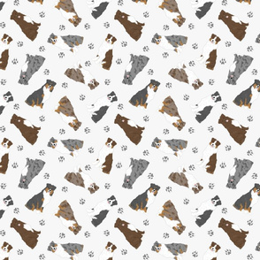 Tiny Australian Shepherds - gray