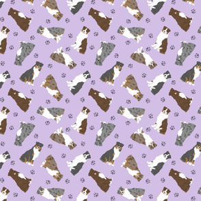 Tiny Australian Shepherds - purple