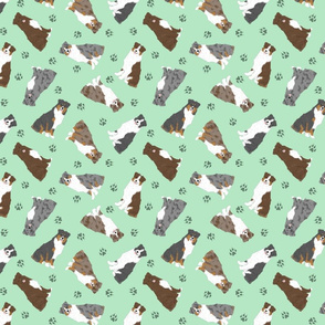 Tiny Australian Shepherds - green