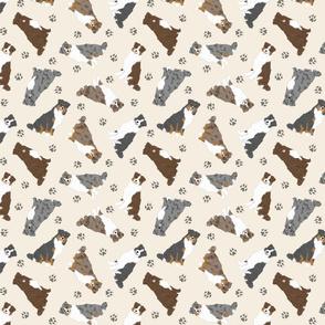 Tiny tailed Australian Shepherds - tan