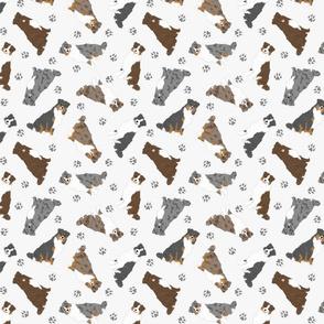 Tiny tailed Australian Shepherds - gray