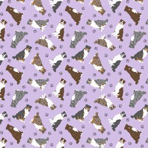 Tiny tailed Australian Shepherds - purple