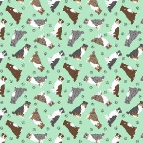 Tiny tailed Australian Shepherds - green