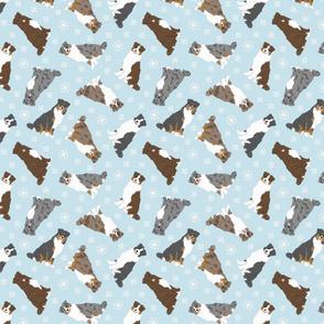 Tiny tailed Australian Shepherds - winter snowflakes